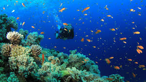 Louisiana Snorkeling images Best snorkeling locations in puerto rico travel tips jpg