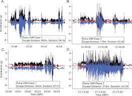 energetics and evasion dynamics of large predators and prey pumas