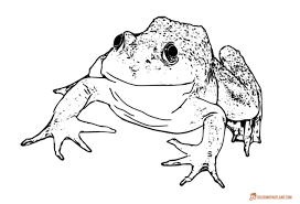 frogs coloring pages downloadable and printable collection