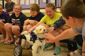 Halo For Blind Dogs Help For Blind Dogs On Love Your Pet Day Noah U0027s Story Bark And