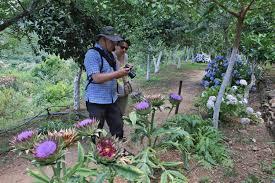 Types Of Botanical Gardens by Botanical Park Of Crete