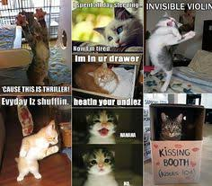 Cat Meme Ladies - tv cat if you like funny pictures other funny stuff then follow me