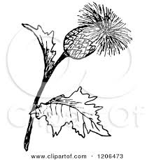 clipart thistle clipart collection thistle thistle floral