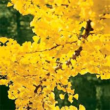 10 best trees and shrubs for fall color trees and shrubs fossil