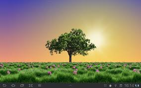 summer trees live wallpaper android apps on google play