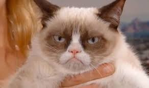 Grumpy Cat Has Died Youtube - grumpy cat to star in garfield style movie will ferrell and jack