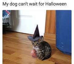 halloween cat meme pictures of cats i find on the internet or i take myself home