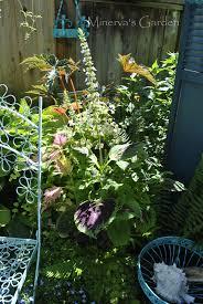 the kitchen patio at minerva u0027s garden 2017 u2013 minerva u0027s garden