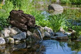 von der umwelt inspiriert naturgarten anlegen bauen de