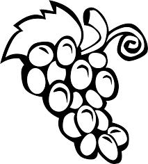 drawn grape simple pencil and in color drawn grape simple