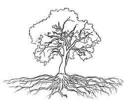 oak tree roots coloring page color