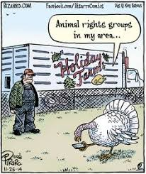 everyday thanksgiving pilgrim thanksgiving and thanksgiving humor