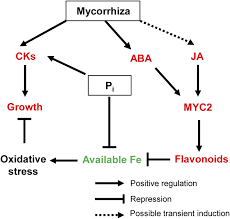 enhanced secondary and hormone metabolism in leaves of arbuscular