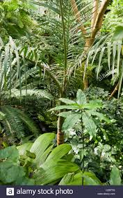 dense jungle foliage in an indoor rainforest at the tropical