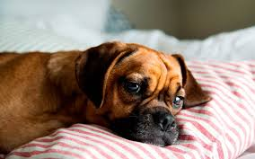 sleep in bed is it ok reader s digest reader s digest