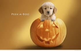 cute pumpkin quotes cute happy halloween quotes of daily