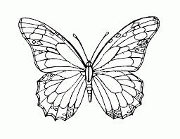 butterfly template to print coloring home