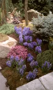 flower bed ideas front of house pictures garden trends