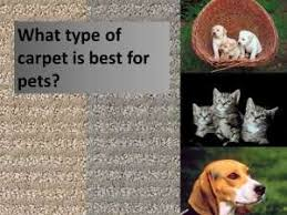 Pet Resistant Rugs What Is The Best Carpet For Pets Stainmaster Petprotect Great