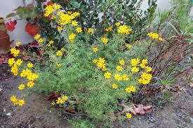 pruning native plants ca native garden hack and slash