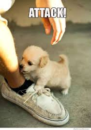 Cute Dog Memes - attack dog weknowmemes