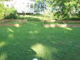 pheasant pen backyard chickens