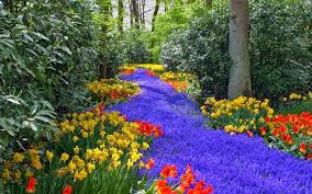 Flowers Information - the river of flowers picture u0026 information all amazing pictures