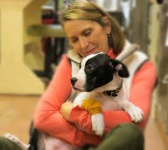 Utah how fast does a sneeze travel images Utah veterinary center 26 reviews veterinarians 308 w 7200th jpg