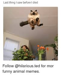 Memes Animals - last thing saw before l died follow for mor funny animal memes