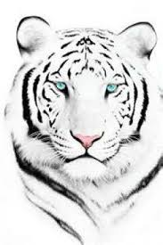 the 25 best white tiger tattoo ideas on pinterest tiger tattoo