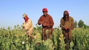 Opium America U0027s Failed War On Drugs In Afghanistan Is Threatening To