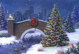 winter cardinal pre winter snow pretty christmas love joy