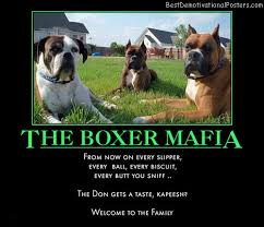 Funny Boxer Dog Memes - the boxer mafia demotivational poster