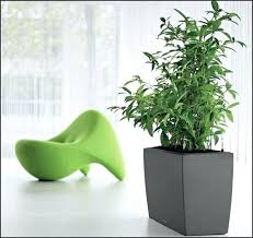 house plants low light indoor herb garden low light the best indoor plants low light ideas
