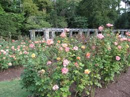 Raleigh Botanical Garden Raleigh Garden God Planted A Garden