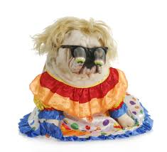 english halloween costumes 22 pets who are completely unconvinced by their halloween costumes
