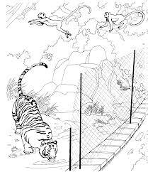 100 tiger shark coloring page 100 lalaloopsy coloring page