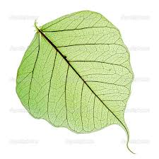 bodhi tree leaf sök på google tattoo ideas pinterest bodhi