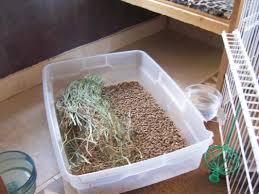 Rabbit Hutch Set Up Odor Free Home Rabbits Indoors