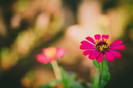 Beautiful Flowers Image Free Stock Photos Of Beautiful Flowers Pexels