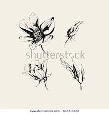 vector orchid sketch blooming flower leaves stock vector 589689143