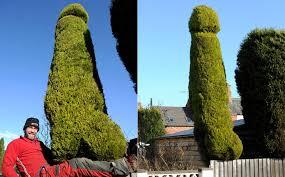 that s a big un tree surgeon trims 18ft tree in bid to