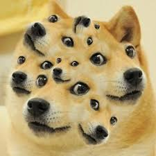 Wow Dog Meme - wow so doge such science much far animals pinterest doge