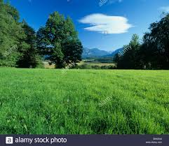 germany murnauer moss nature plants trees meadow field green