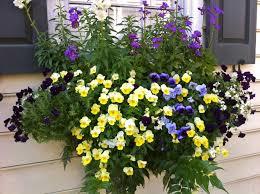 best 25 holly fern ideas on pinterest side walkway planters