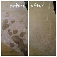 clean carpet and fabric care carpet cleaning denton tx
