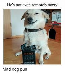 Pun Dog Meme - he s not even remotely sorry aeg mad dog pun meme on me me