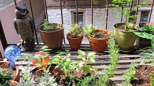 cool vegetable garden ideas for an apartment balcony youtube