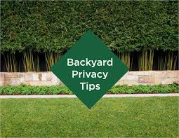 backyard privacy tips living outdoors