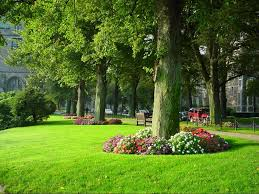 create landscaping ideas around trees dream houses